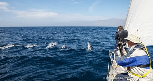 White-beaked dolphins put on a show for us