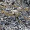 Self-Study of Polar Bears